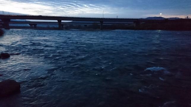九頭竜川 サクラマス 2016